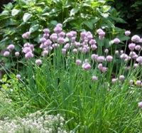 Why you should use edible plants in your garden