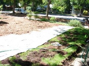 Newspaper and wood chip mulch are layered over the lawn.